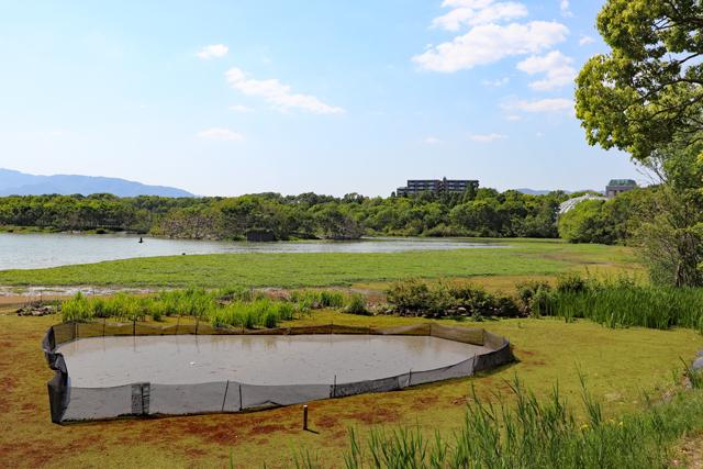 昆陽池公園(右奥が伊丹市昆虫館)