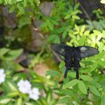 伊丹市昆虫館|1年中舞い踊る、1000匹のチョウ(兵庫名所巡り)