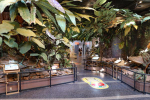 伊丹市昆虫館・1階展示室ジオラマ