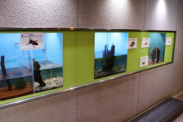 伊丹市昆虫館・昆虫の生態展示