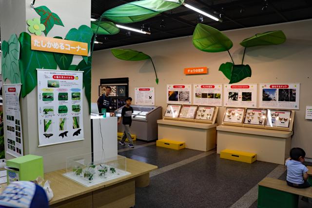 伊丹市昆虫館・2階展示室