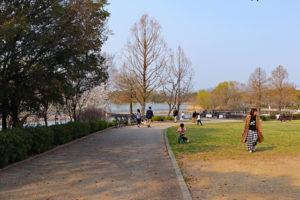 昆陽池公園の園内