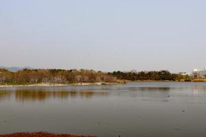 昆陽池公園・園内風景