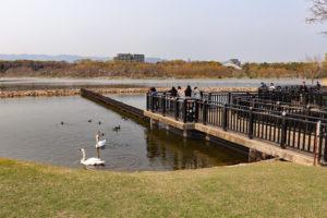 昆陽池公園・野鳥観察橋