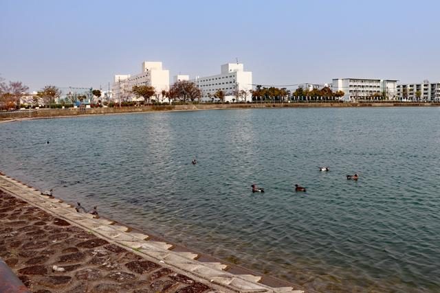 昆陽池公園・貯水池