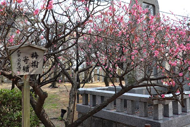 綱敷天満宮・境内の梅