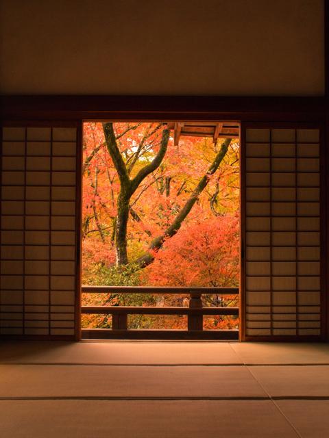 宝筐院・本堂内から眺める庭の紅葉