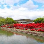 長岡天満宮|大鳥居すぐ後ろ、池を貫く真紅のツツジ道(京都名所巡り)
