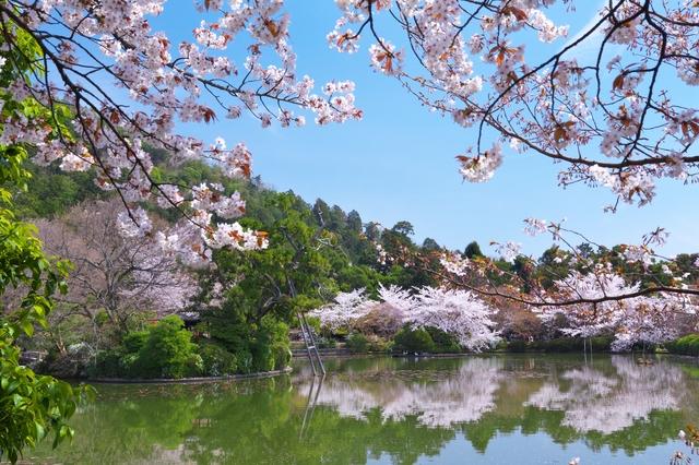 龍安寺庭園・鏡容池