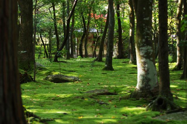 秋篠寺の苔じゅうたん