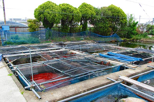 金魚資料館の風景