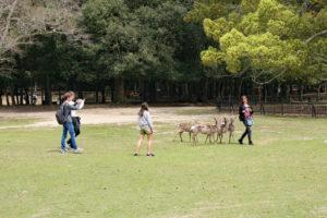 鹿とのふれあい