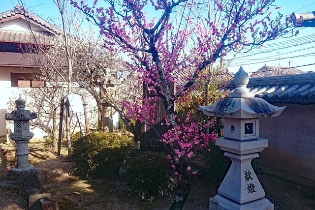 菅原天満宮・境内の梅