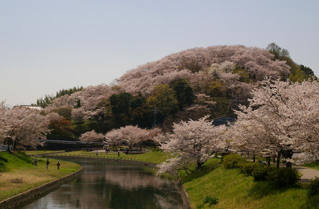 三室山の桜