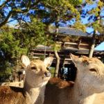 東大寺|大仏に南大門、国宝だらけの「文化財の宝庫」(奈良名所巡り)