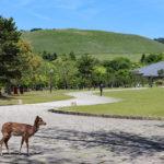 奈良公園から眺める若草山