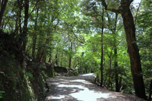 春日山遊歩道