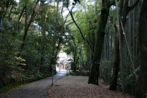 烏帽子形八幡神社・南参道の竹林