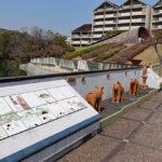 ハニワ工場公園|大王の墓にも納入、古代の埴輪製造所(大阪名所巡り)