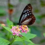 箕面公園昆虫館|珍しい虫の生態展示と放蝶館が大人気(大阪名所巡り)