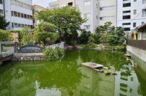 星合池(亀の池)