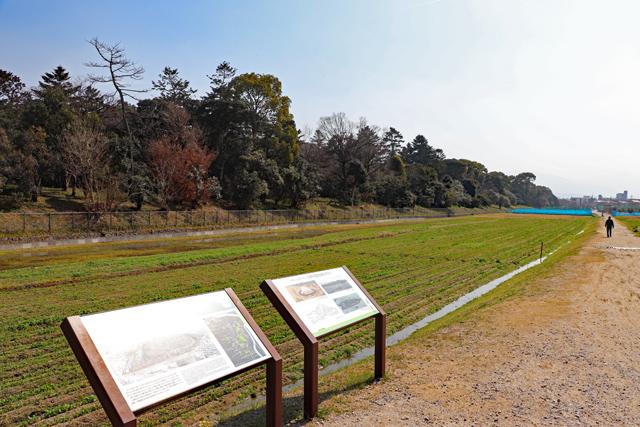 応神天皇陵・古墳西側外濠外提