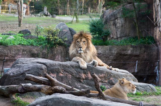 アフリカサバンナ・肉食動物