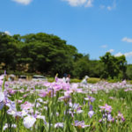 津堂城山古墳|気軽にお散歩も楽しめる開放的な墳丘(大阪名所巡り)