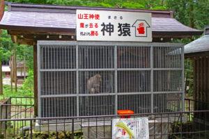 日吉大社の猿