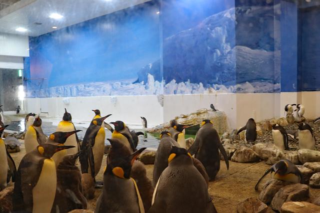 アドベンチャーワールド・ペンギン王国
